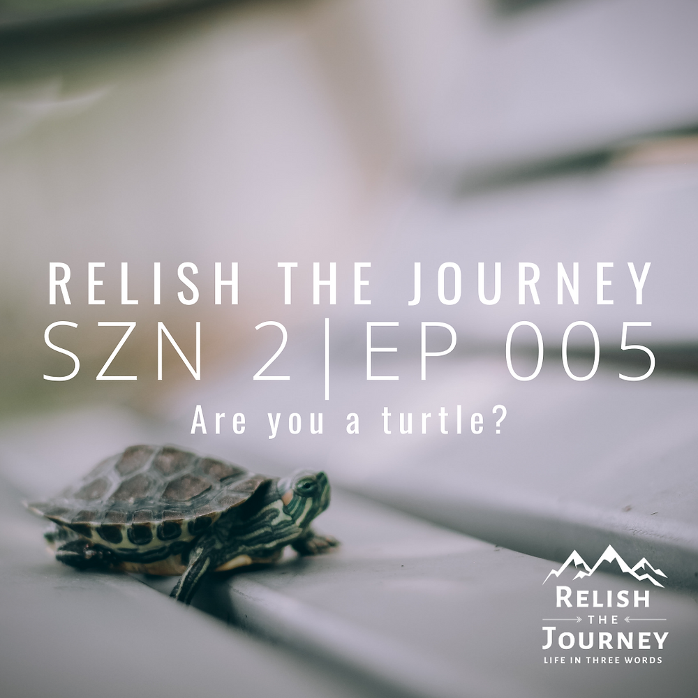 A turtle on a bench to promote Relish The Journey podcast
