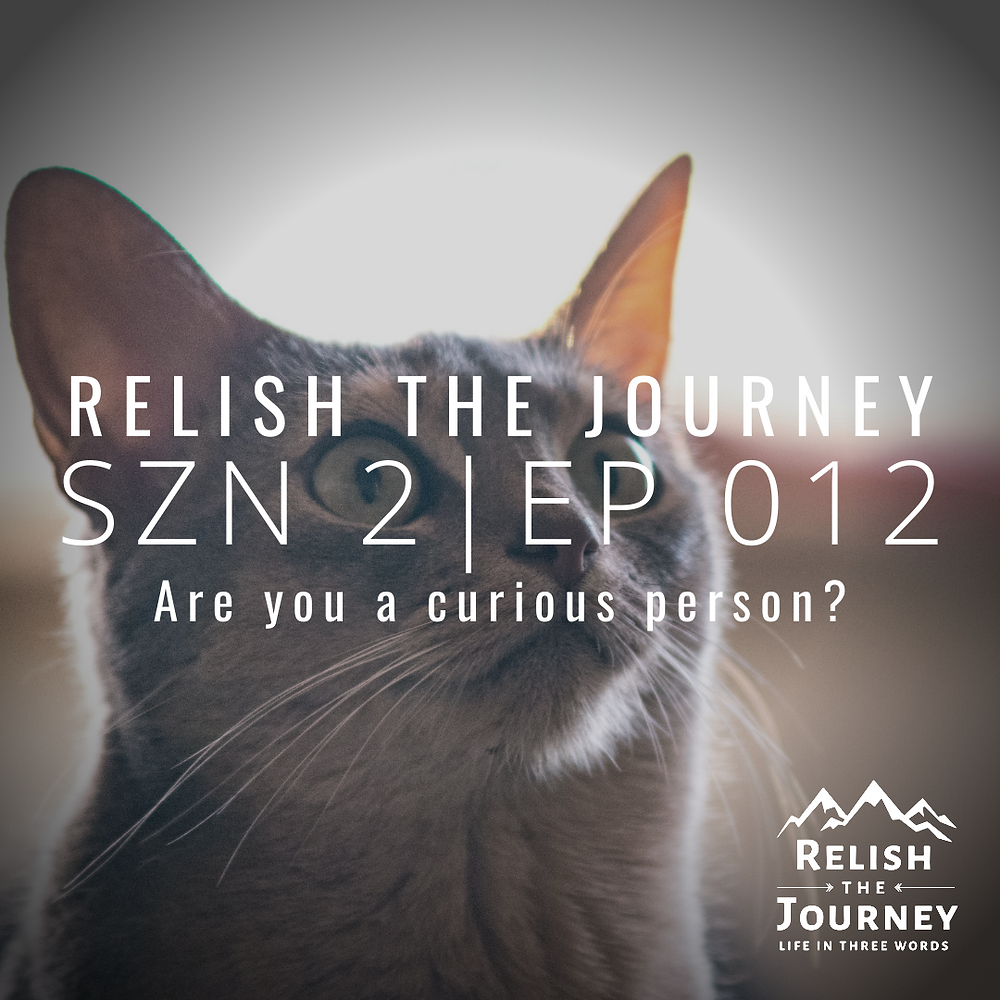 A photo of a curious cat to illustrate the point made on this episode of the Relish The Journey podcast, hosted by Myles Biggs