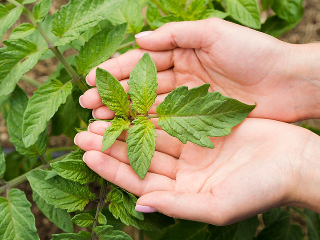 woman-holding-plant-in-her-hands.jpg