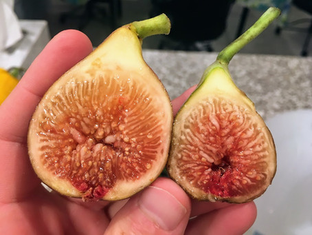 Some Underrated Fig Variety Options