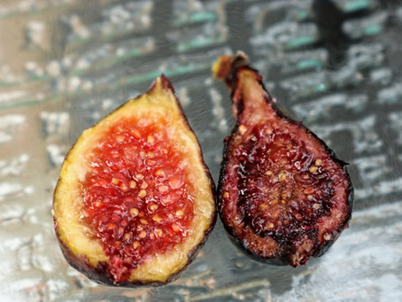 My Top 8 Overall Best Fig Varieties