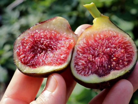 Calderona Fig - Better than Black Madeira