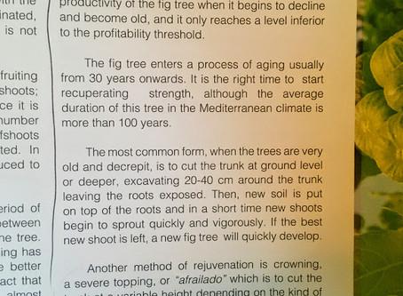 Rejuvenation Pruning - A technique we should do more of...