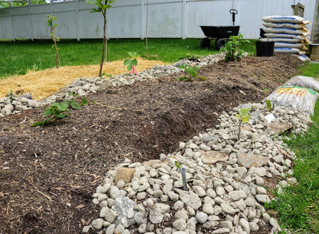 50 Trees in Ground this Spring: Finished Product & Thoughts
