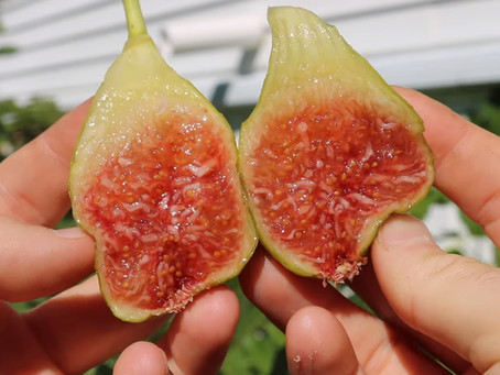 Name this Fig & Win!