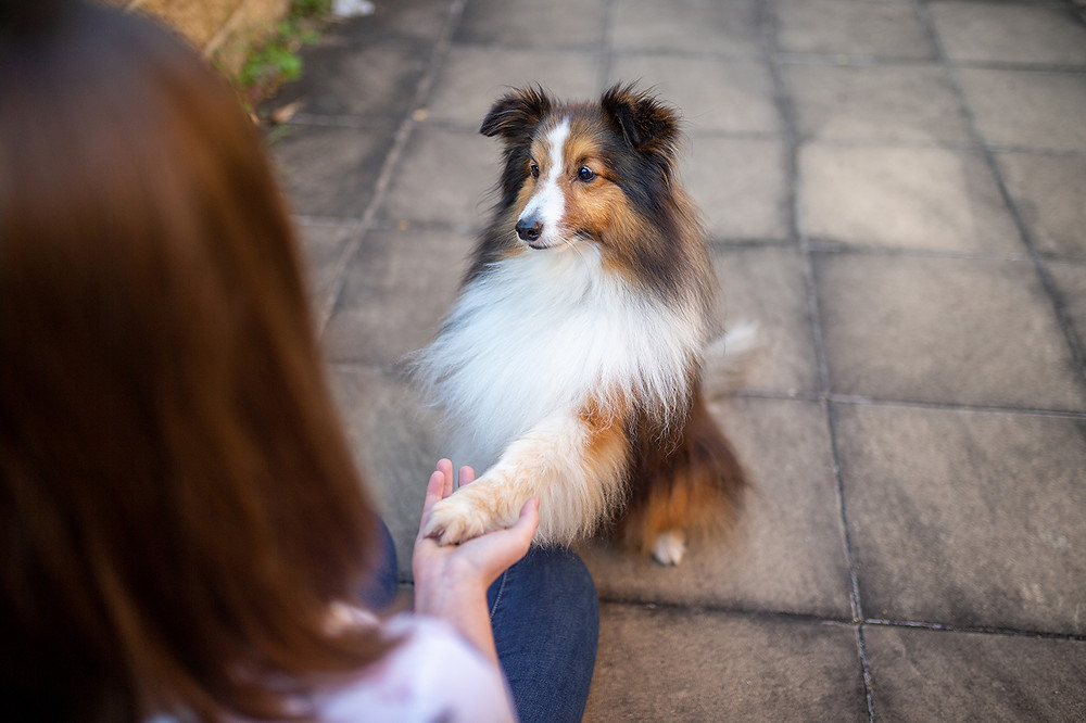 a dog shaking paws with its owner while learning new tricks and dog training for enrichment