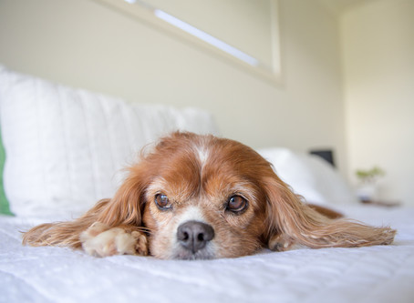 How to work from home with your dog - our top tips to keep you and your dog happy while in isolation