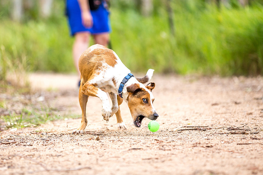a dog is leaning down to catch a ball while playing a game of fetch