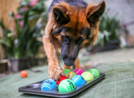 5 Canine Enrichment Ideas on a Budget