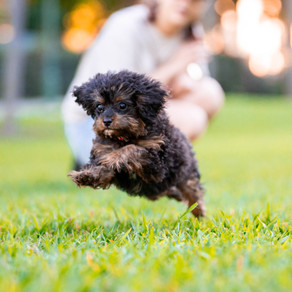 Why puppy school is an important part of raising a well-adjusted dog