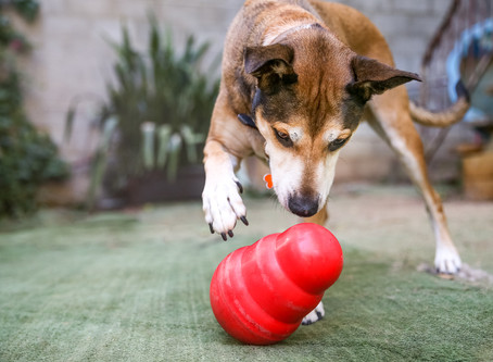 Why Enrichment Will Make Life Better for You and Your Dog!