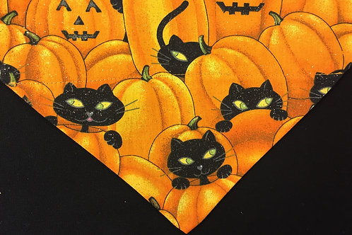 Cats Hiding in Pumpkin Patch