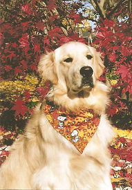 Golden Retreiver 1.jpg