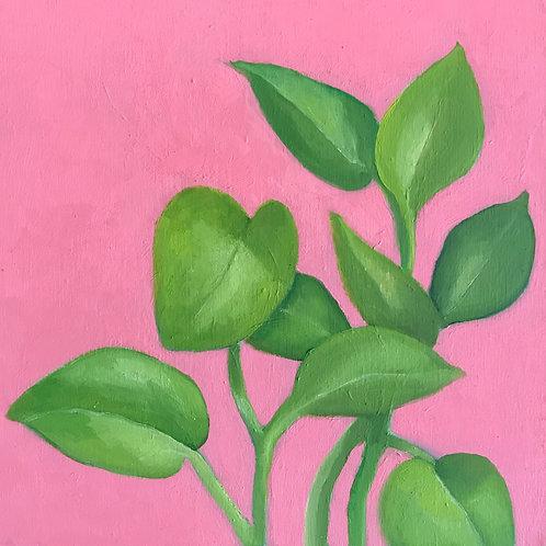 Plant Pathos