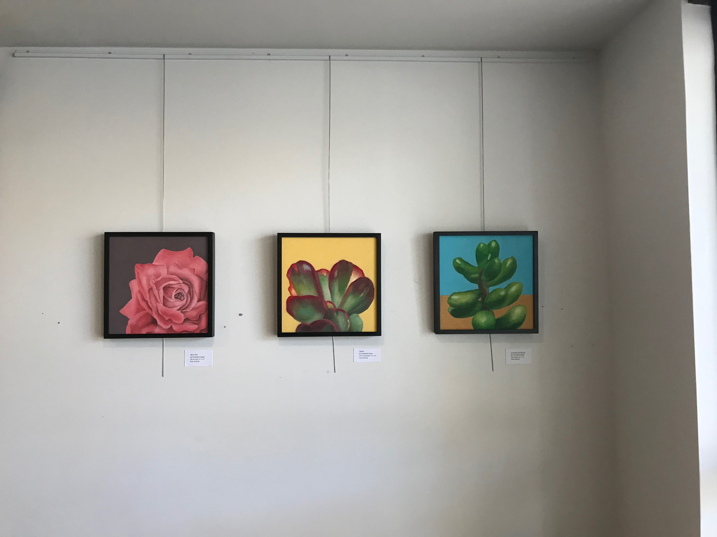 Rose and Plant Paintings