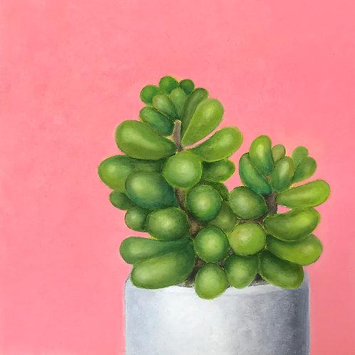 Plant Jellybeans