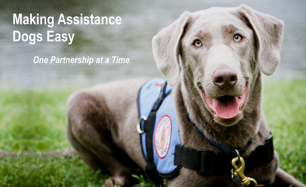 Assistance Dogs In Texas
