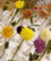 Floral%202013%20(14)_edited.jpg