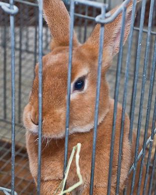 small animals 2012 (6).jpg