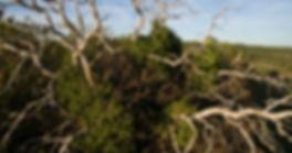 Birds eye view of tree
