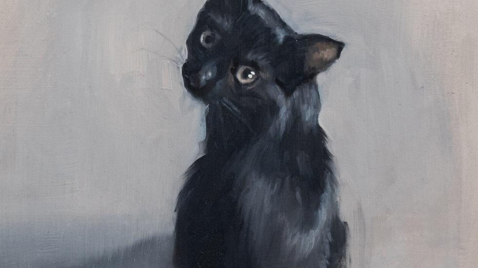 Black Cat Study