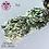 Thumbnail: Freya - Galaxy Holo Flakes