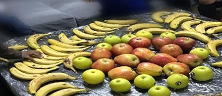 אורנשטיין- דוגמא של פירות המוגשים לילדי בית הספר לכדורגל