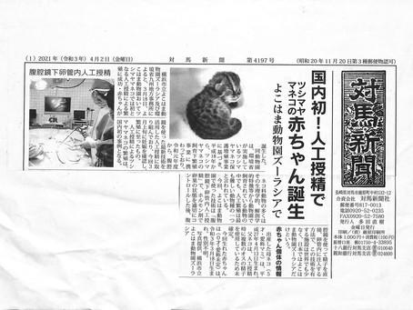 人工授精でツシマヤマネコの赤ちゃん誕生