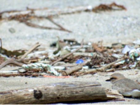 多摩川から母なる海へ - 多摩川と海の環境を家族で考えるワークショップ – を開催(11/15-Sun)