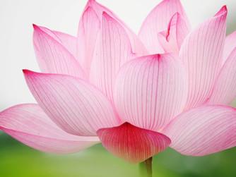 蓮花針灸對癌症疼痛症的探討