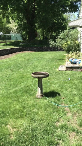 Backyard no sound.mov