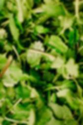 green-herbs-3338495.jpg