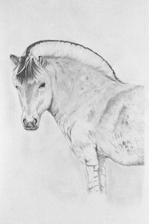 Original graphite pencil drawing Tobias