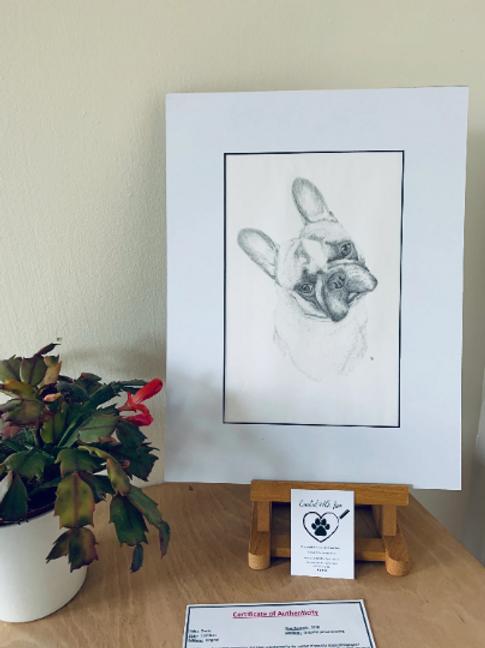 French Bull Dog Original Drawing