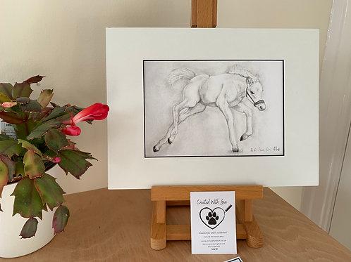Foal Fun Print