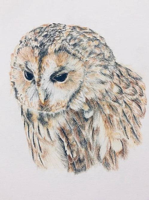 Tawny Owl Original Drawing