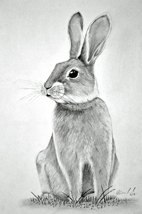 Romeo Rabbit Prints
