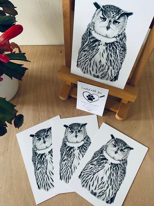 Grumpy Owl postcards