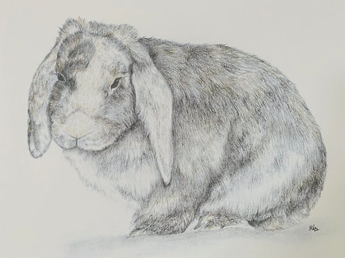Sydney the Rabbit Print