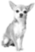 chihuahua-silhouette_edited.png