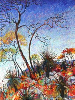 Grass Tree Hill