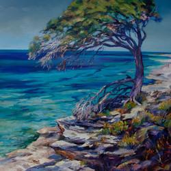 Tree Majesty