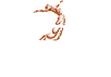 GWD logo-2 copper_white.png