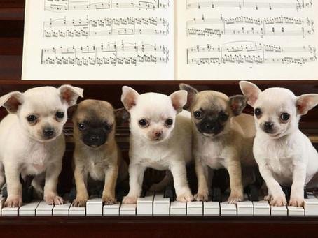 Piano teachers: Crooks vs Pros. Who's teaching you music?