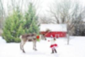 christmas-scene-1846486_1280.jpg