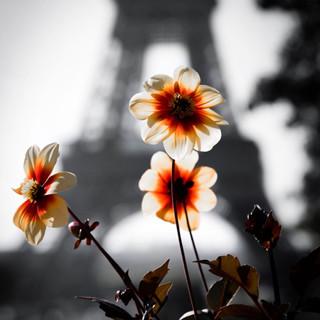 Paris, 10