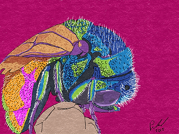 Drawing of a fly