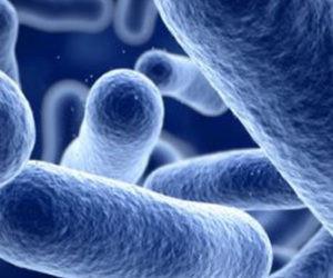 Listerien und Ozon, Dokumente