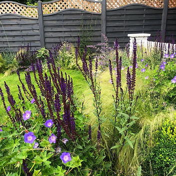Chelmsford Garden Project
