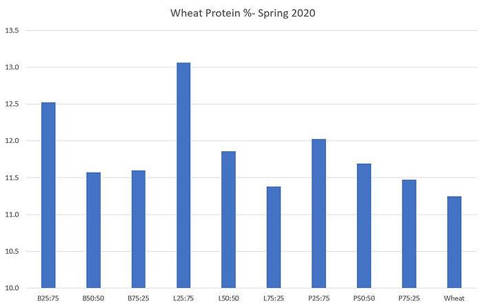 Spring wheat protein.JPG